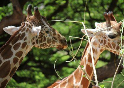 Hawaii Zoo