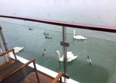 Swans on the Balcony
